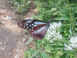 昆虫観察 わくわく自然体験