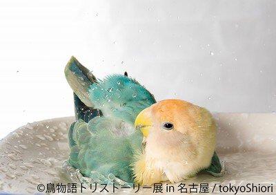 鳥物語トリストーリー展 in 名古屋