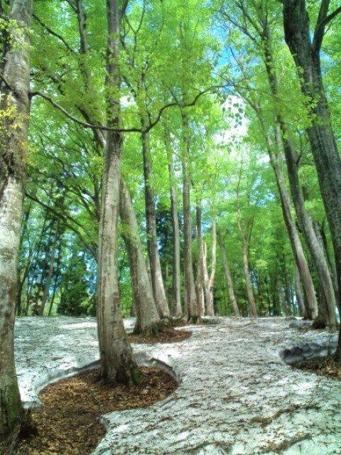 春を見つけよう!残雪と新緑のブナ林ハイキング