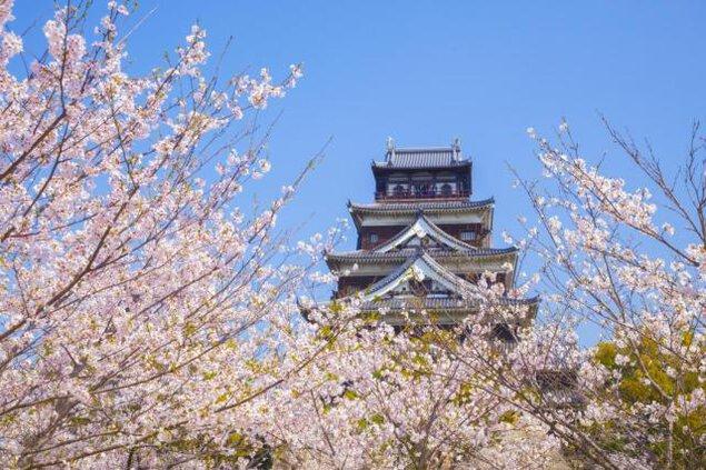 【桜・見ごろ】広島城