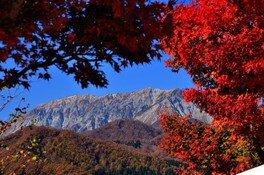 蒜山高原の紅葉