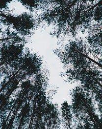 津田直 エリナスの森 Nao Tsuda Photo Exhibition | Elnias Forest