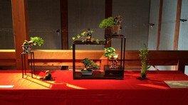蔵の中のミニ盆栽「立夏展」
