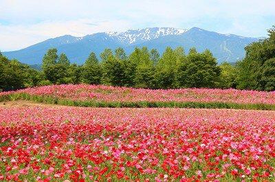初夏の花まつり2020