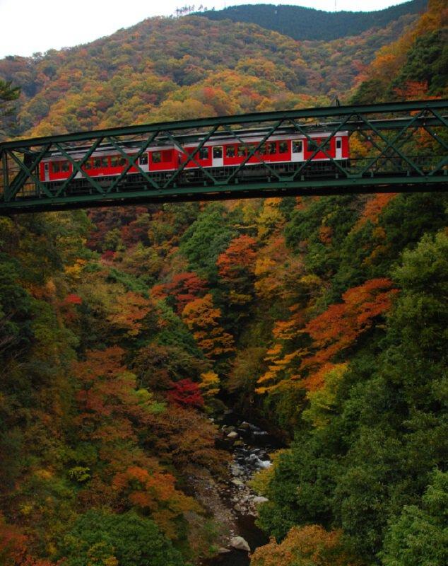 出山鉄橋(早川橋梁)の紅葉