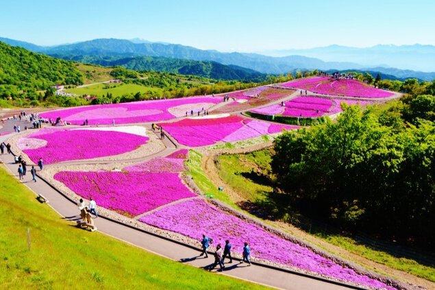 2021 茶臼山高原「芝桜まつり」