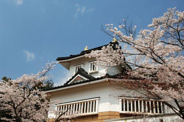【桜・見ごろ】小倉公園