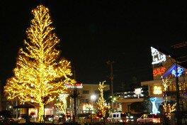 志免町のシンボルツリーがイルミネーションで彩られる