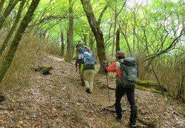 新緑のブナ林を歩く ~ウツナシ峠縦走コース~