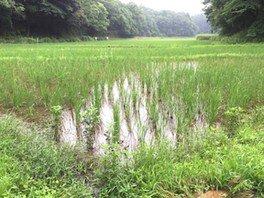 竹を使ってキャンプをしよう 〜親子の自然体験プログラム〜