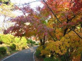 【紅葉・見ごろ】野岳湖公園