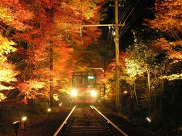 もみじのトンネルの紅葉