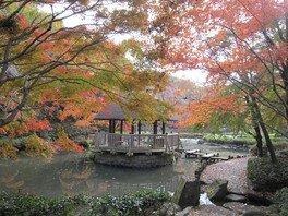 神奈川県立東高根森林公園の紅葉