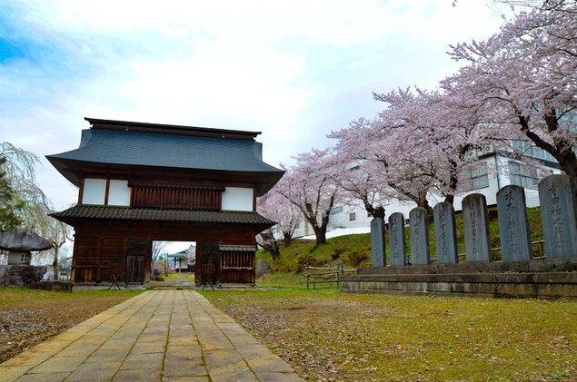 飯山城址の桜