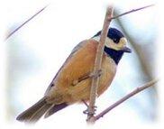 魅力あっぷセミナー 総合運動公園で冬の野鳥観察