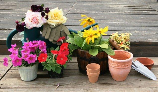 春の園芸相談会