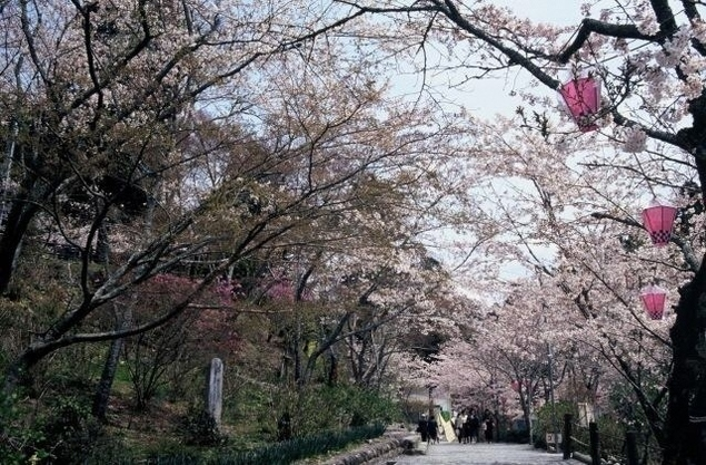 【桜・見ごろ】法多山尊永寺