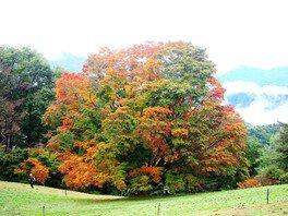 大峰高原七色大カエデの紅葉