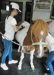 一日愛馬教室