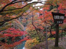 大血川渓谷(金蔵落し)の紅葉