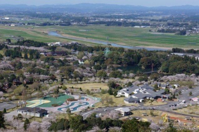 【桜・見ごろ】観音池公園