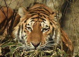 サマーナイト@Tama Zoo 2018 トラもめざめる夜の動物園