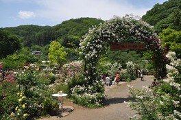 滝ノ入ローズガーデン 春のバラまつり