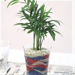 観葉植物のサンドアート