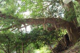 つるぎクラブ定番巨樹めぐりツアー 定番(9月)