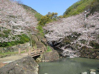 不動の滝カントリーパークの桜