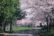 川中島古戦場史跡公園