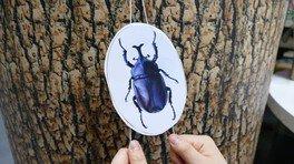 わくわく科学工作「ジグザグのぼる昆虫をつくろう!」
