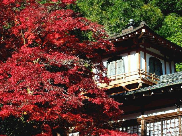 箕面公園(瀧安寺)の紅葉