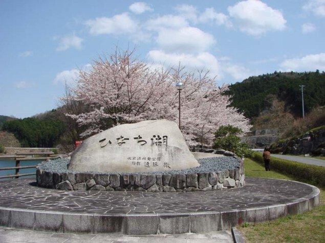 【桜・見ごろ】比奈知湖周辺