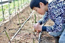 5月限定!アスパラ収穫体験