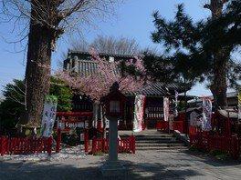 鴻神社の桜