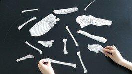 科学教室「昔の生き物の姿を復元する!」