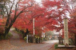 金生山明星輪寺の紅葉