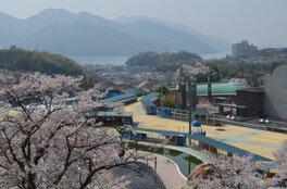 ちゅーピーパークの桜