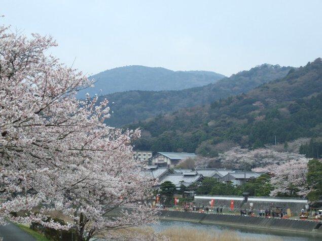 五十鈴川桜まつり