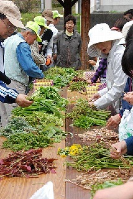 茶臼山高原の山菜を、天ぷらや草もちにして食べよう!