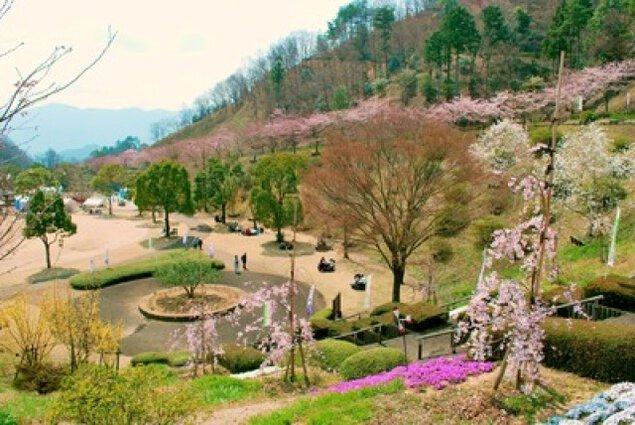 【桜・見ごろ】神山森林公園イルローザの森