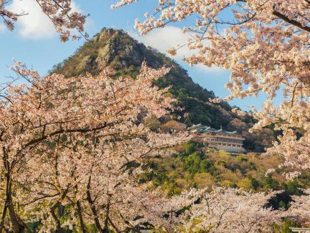 【桜・見ごろ】太郎坊宮