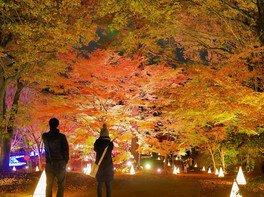 国営武蔵丘陵森林公園の紅葉