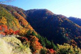 三峰山の紅葉