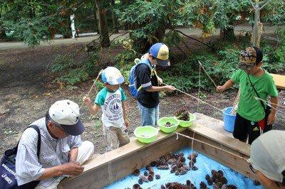 神戸市立森林植物園 森で遊ぼうなつやすみ