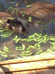 須坂市動物園 節分イベント