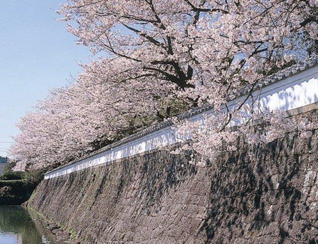 【桜・見ごろ】月隈公園