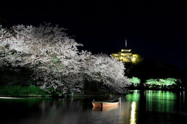 三溪園 観桜の夕べ<中止となりました>