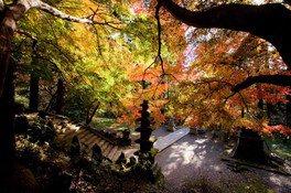 建長寺の紅葉